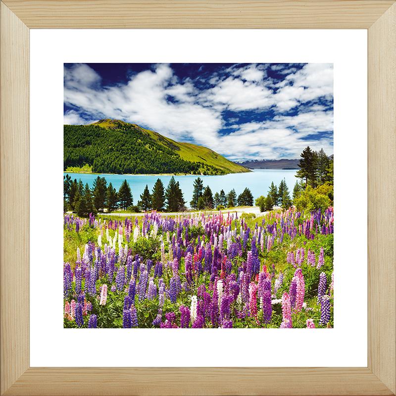 Картина Postermarket Дикие люпины в Новой Зеландии, 40 х 40 см. MC-41MC-41