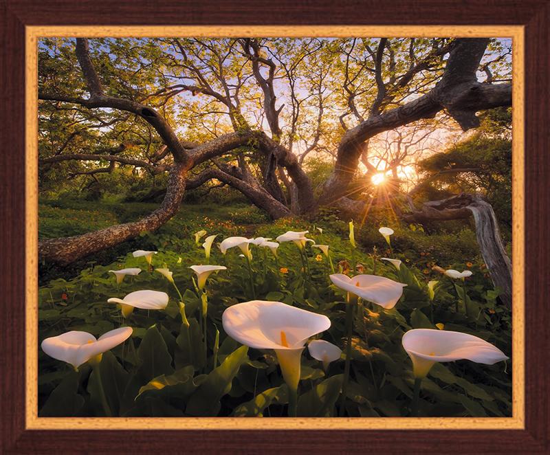 Картина Postermarket Рай на Земле, 40 х 50 см. PM-4019PM-4019