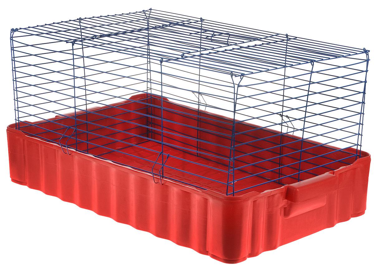 Клетка для кроликов ЗооМарк, цвет: красный поддон, синяя решетка, 75 х 46 х 40 см640КСКлетка для кроликов ЗооМарк, выполненная из металла и пластика, предназначена для содержания вашего любимца. Клетка имеет прямоугольную форму и очень просторна. Размеры позволят оснастить клетку всеми необходимыми предметами. Она очень легко собирается и разбирается. Такая клетка станет для вашего питомца уютным домиком и надежным убежищем.