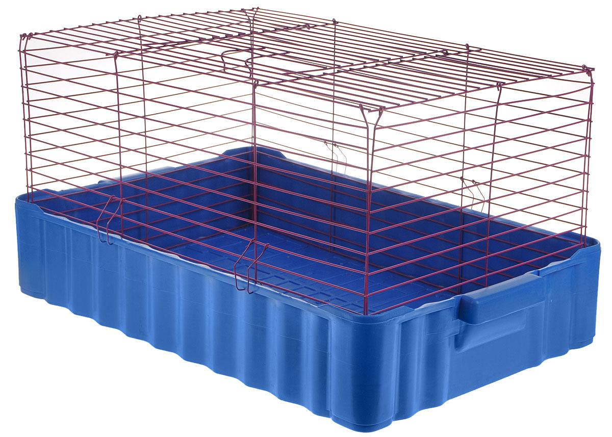 Клетка для кроликов ЗооМарк, цвет: синий поддон, фиолетовая решетка, 75 х 46 х 40 см640СФКлетка для кроликов ЗооМарк, выполненная из металла и пластика, предназначена для содержания вашего любимца. Клетка имеет прямоугольную форму и очень просторна. Размеры позволят оснастить клетку всеми необходимыми предметами. Она очень легко собирается и разбирается. Такая клетка станет для вашего питомца уютным домиком и надежным убежищем.