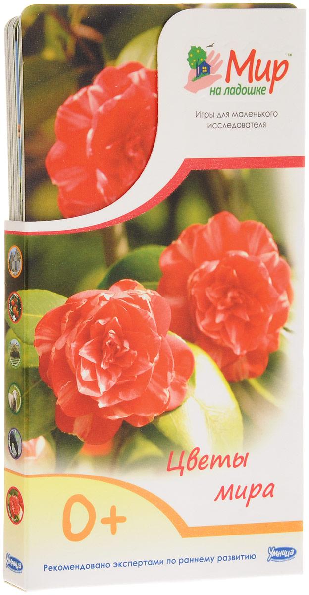 Умница Обучающие карточки Цветы мира2020Какой цветок называют живым камнем? Где растет цветок водяного бога? Какие цветы являются ровесниками динозавров? Сколько интересных фактов, легенд и историй связано с цветами! Комплект Цветы мира познакомит малыша с самыми красивыми и необычными растениями нашей планеты. Создайте свой мир цветов: можно искупаться среди цветков лотоса, вдохнуть нежные ароматы магнолии и подарить маме букет пышных гладиолусов. Ламинированные карточки с яркими фотографиями удобно умещаются в детской ладошке. С ними можно играть в любом месте и в любое время. На обороте карточек собраны самые удивительные факты об окружающем мире. В комплект входит карточка для родителей с методическими рекомендациями и правилами игры. В игре малыш учится наблюдать, анализировать, описывать и классифицировать объекты живой и неживой природы. Интересные творческие задания помогают развивать воображение, образное мышление и моторику.