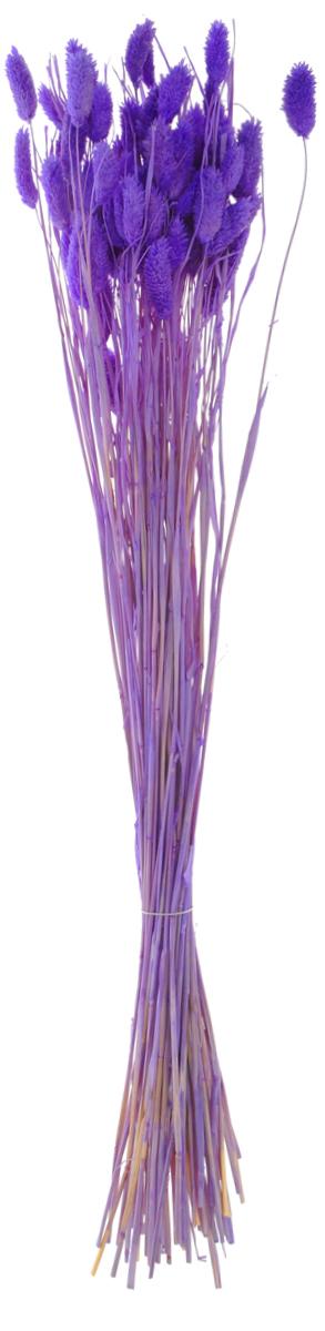 Украшение декоративное Lovemark Пучок. Фалярис, длина 77 см6009Каждое время года по-своему прекрасно. Однако как часто поздней осенью и долгой зимой нам не хватает тепла, ярких весенних красок, которые дарят цветы. Этот недостаток можно восполнить благодаря композициям из сухоцветов. Букет из сухих цветов способен сохранять свою красоту на протяжении всего года, а уход за ним минимален. Очень удобны сухоцветы и для использования их людьми с повышенной аллергической реакцией на пыльцу растений и различные резкие запахи. Подчеркните свой неповторимый вкус в интерьере с помощью нежной композиции из сухих цветов.