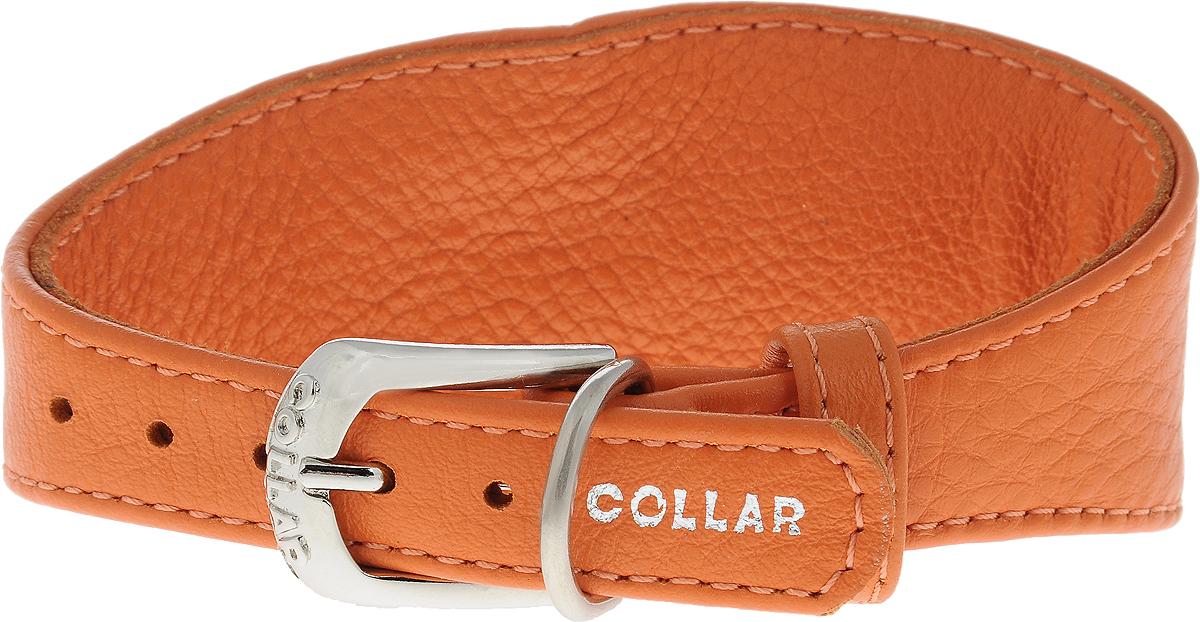 Ошейник для борзых собак CoLLaR Glamour, цвет: оранжевый, ширина 1,5 см, обхват шеи 23-27 см34644Ошейник для борзых собак CoLLaR Glamour, выполненный из натуральной кожи, устойчив к влажности и перепадам температур. Крепкие металлические элементы делают ошейник надежным и долговечным. Изделие отличается высоким качеством, удобством и универсальностью. Размер ошейника регулируется при помощи пряжки, зафиксированной на одном из 5 отверстий. Минимальный обхват шеи: 23 см. Максимальный обхват шеи: 27 см. Минимальная ширина: 1,5 см. Максимальная ширина: 5 см.