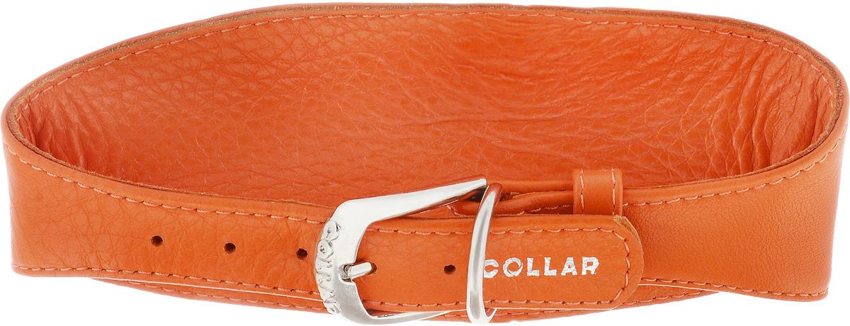 Ошейник для борзых собак CoLLaR Glamour, цвет: оранжевый, ширина 2 см, обхват шеи 34-40 см34674Ошейник для борзых собак CoLLaR Glamour, выполненный из натуральной кожи, устойчив к влажности и перепадам температур. Крепкие металлические элементы делают ошейник надежным и долговечным. Изделие отличается высоким качеством, удобством и универсальностью. Размер ошейника регулируется при помощи пряжки, зафиксированной на одном из 5 отверстий. Минимальный обхват шеи: 34 см. Максимальный обхват шеи: 40 см. Минимальная ширина: 2 см. Максимальная ширина: 8 см.