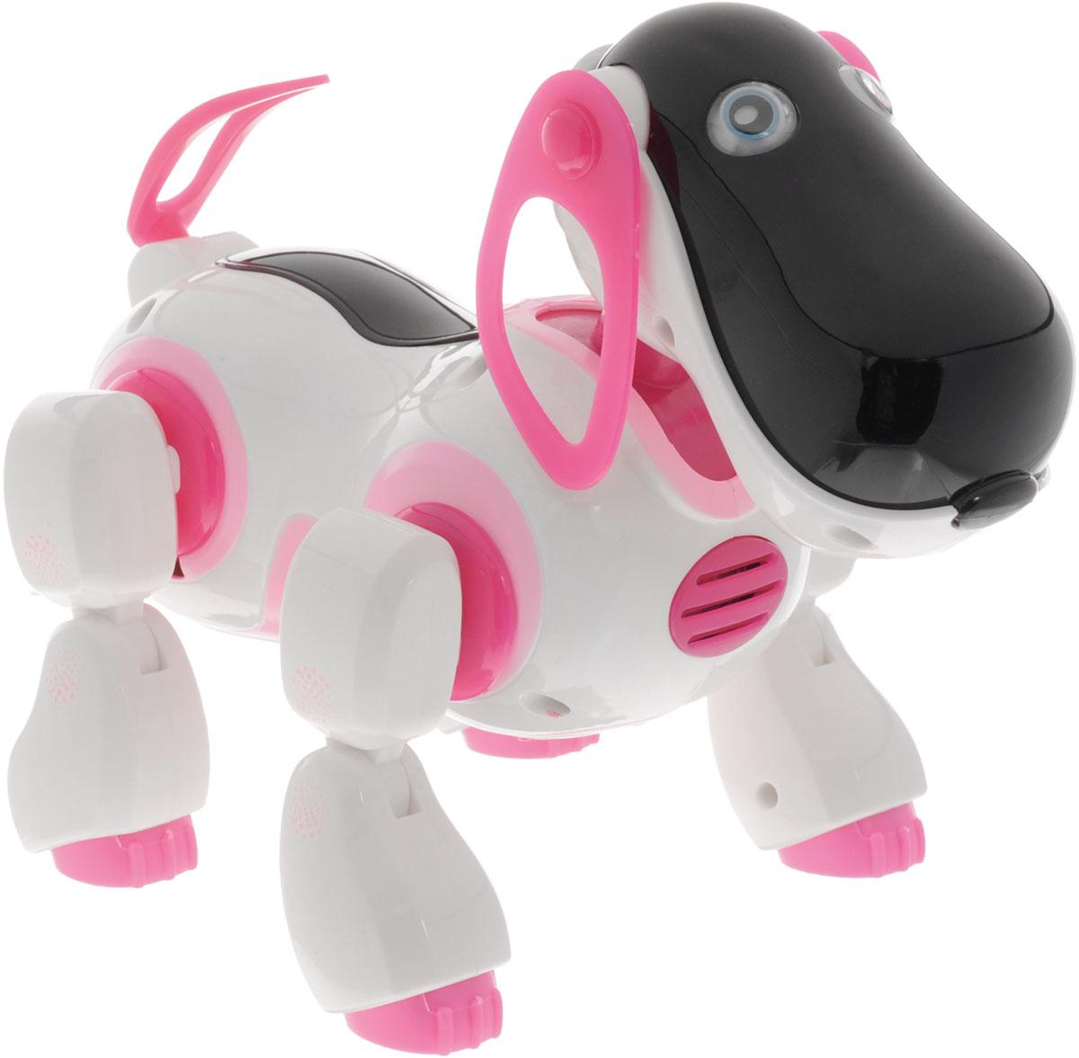 Играем вместе Интерактивный робопес на инфракрасном управлении цвет белый розовыйB903251-R_розовыйИнтерактивный робопес на инфракрасном управлении Играем вместе станет настоящим другом вашему малышу. С такой игрушкой вашему ребенку никогда не будет скучно. Сделайте своему малышу такой замечательный подарок. Игрушка изготовлена из высококачественных материалов и безопасна для здоровья. Игрушечная собачка готова не только играть и весело проводить время с ребенком, но и помочь ему в изучении математики. Также она умеет ходить вперед и назад, бегать, вилять хвостом и даже танцевать! Робопес поет песни и рассказывает стихи. Для работы игрушки рекомендуется докупить 4 батарейки напряжением 1,5V типа АА (товар комплектуется демонстрационными). Для работы пульта управления рекомендуется докупить 2 батарейки напряжением 1,5V типа АА (товар комплектуется демонстрационными).