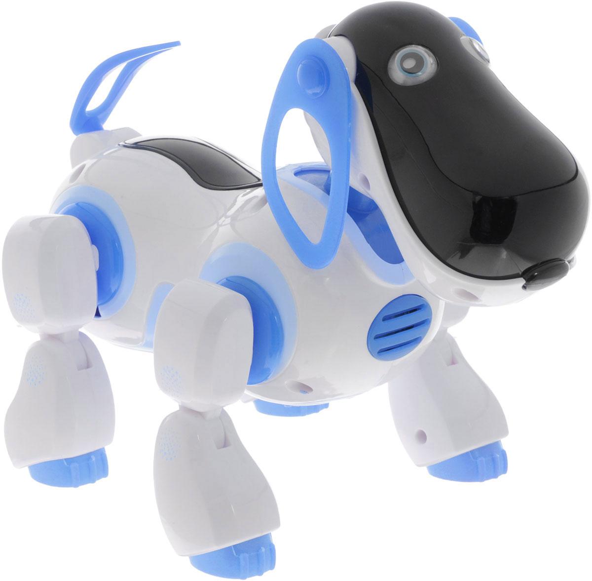 Играем вместе Интерактивный робопес на инфракрасном управлении цвет белый голубойB903251-R_голубойИнтерактивный робопес на инфракрасном управлении Играем вместе станет настоящим другом вашему малышу. С такой игрушкой вашему ребенку никогда не будет скучно. Сделайте своему малышу такой замечательный подарок. Игрушка изготовлена из высококачественных материалов и безопасна для здоровья. Озорная собачка готова не только играть и весело проводить время с ребенком, но и помочь ему в изучении математики. Также она умеет ходить вперед и назад, бегать, вилять хвостом и даже танцевать! Робопес поет песни и рассказывает стихи. Для работы игрушки рекомендуется докупить 4 батарейки напряжением 1,5V типа АА (товар комплектуется демонстрационными). Для работы пульта управления рекомендуется докупить 2 батарейки напряжением 1,5V типа АА (товар комплектуется демонстрационными).