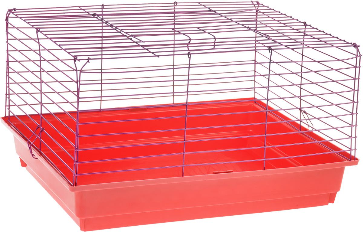 Клетка для кролика ЗооМарк, цвет: красный поддон, фиолетовая решетка, 60 х 40 х 35 см620КФКлассическая клетка ЗооМарк со сплошным дном станет уединенным личным пространством и уютным домиком для кролика. Изделие выполнено из металла и пластика. Клетка надежно закрывается на защелки. Легко чистится. Для более удобной транспортировки клетку можно сложить.