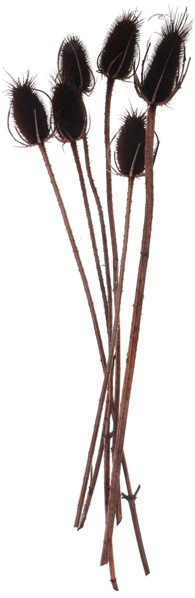 Украшение декоративное Lovemark Эхинопс, 6 шт6025Украшение декоративное Эхинопс - великолепный подарок себе и вашим близким. Этот очаровательный предмет интерьера будет приковывать взгляды ваших гостей. Изделия из соломки несут в себе энергию солнечных лучей. Несмотря на свой хрупкий вид, cоломка прочный и долговечный материал, а значит не помнется и не поломается со временем. Рекомендации по уходу: изделие должно находиться в сухом помещении.