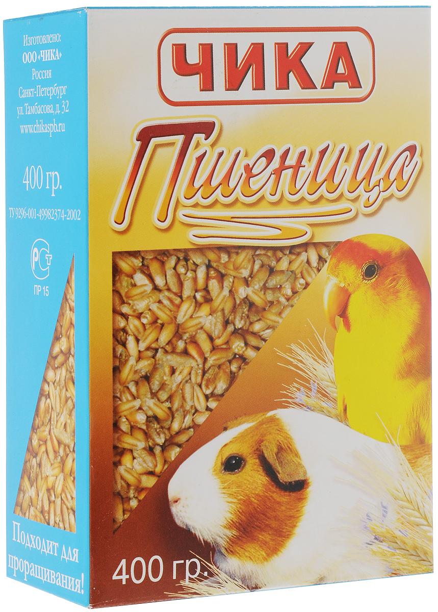 Добавка к корму Чика Пшеница для птиц и грызунов, 400 г4607045060318Добавка к корму Чика Пшеница является необходимой частью в рационе декоративных птиц и грызунов. Пшеница – злаковая культура, богатая углеводами. Особенно она полезна в неочищенном виде, так как именно в шелухе сохраняются все основные витамины. Кроме того, от неочищенного зерна у птиц укрепляется клюв, благодаря чему, он не деформируется. Грызунам полезна для зубов. Пшеница благотворно влияет на обменные процессы в организме ваших питомцев. Употребляя добавку к корму Чика Пшеница, ваш питомец будет здоровым и жизнерадостным. Товар сертифицирован.