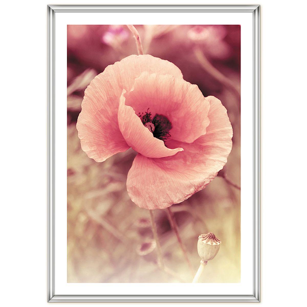 Фоторамка Pioneer Poster Silver, 40 x 50 см9110 PR foilРамка для фото формата 40х50 см. Материал: пластик. Материалы, использованные в изготовлении рамок, обеспечивают высокое качество хранения Ваших фотографий, поэтому фотографии не желтеют со временем.