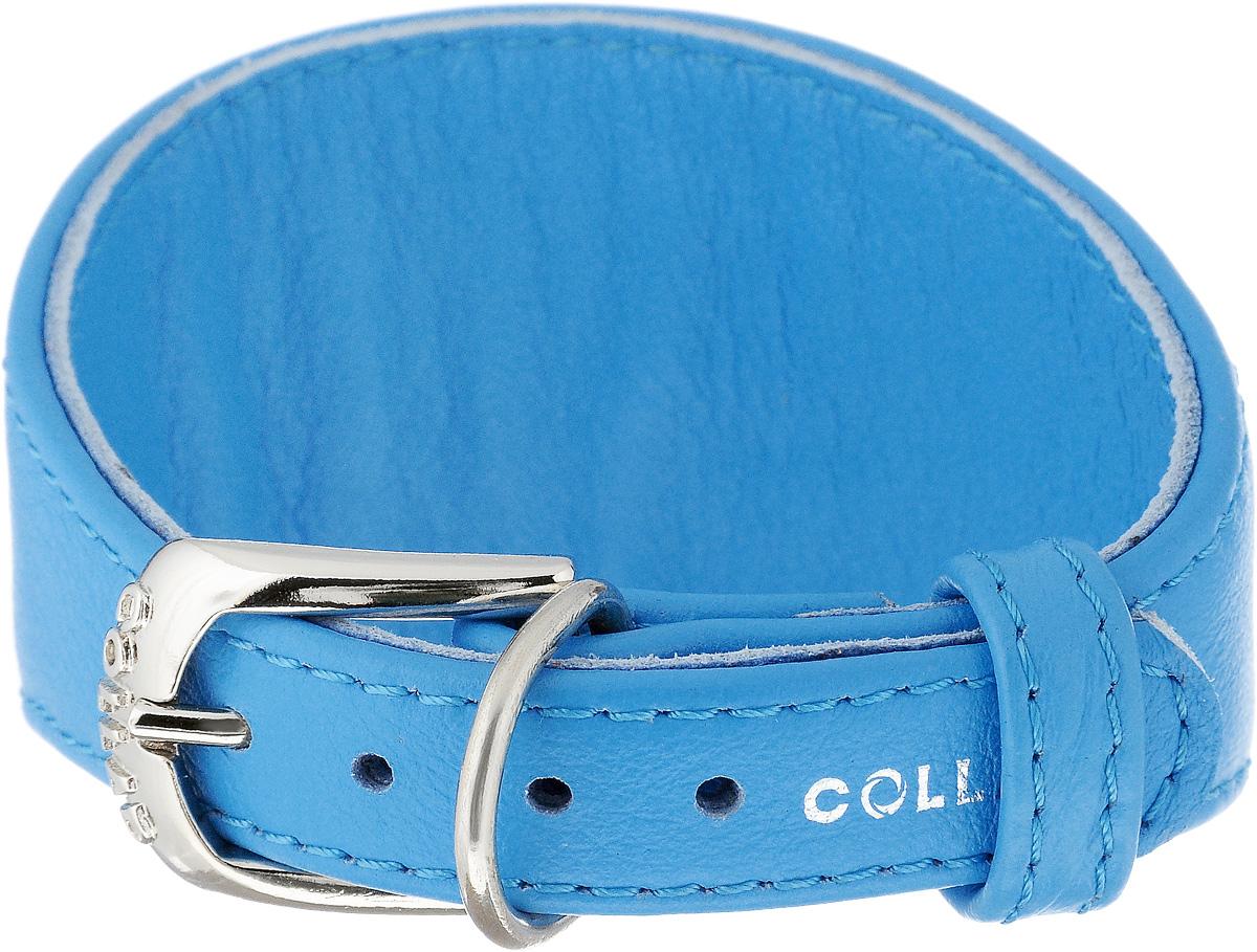 Ошейник для борзых собак CoLLaR Glamour, цвет: голубой, ширина 1,5 см, обхват шеи 23-27 см34642Ошейник для борзых собак CoLLaR Glamour, выполненный из натуральной кожи, устойчив к влажности и перепадам температур. Крепкие металлические элементы делают ошейник надежным и долговечным. Изделие отличается высоким качеством, удобством и универсальностью. Размер ошейника регулируется при помощи пряжки, зафиксированной на одном из 5 отверстий. Минимальный обхват шеи: 23 см. Максимальный обхват шеи: 27 см. Минимальная ширина: 1,5 см. Максимальная ширина: 5 см.
