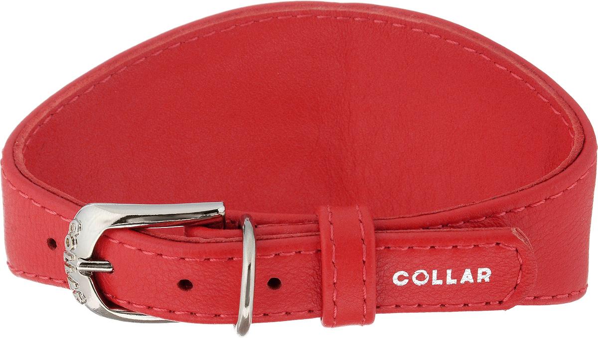 Ошейник для борзых собак CoLLaR Glamour, цвет: красный, ширина 1,5 см, обхват шеи 26-32 см34653Ошейник для борзых собак CoLLaR Glamour, выполненный из натуральной кожи, устойчив к влажности и перепадам температур. Крепкие металлические элементы делают ошейник надежным и долговечным. Изделие отличается высоким качеством, удобством и универсальностью. Размер ошейника регулируется при помощи пряжки, зафиксированной на одном из 5 отверстий. Минимальный обхват шеи: 26 см. Максимальный обхват шеи: 32 см. Минимальная ширина: 1,5 см. Максимальная ширина: 5,5 см.