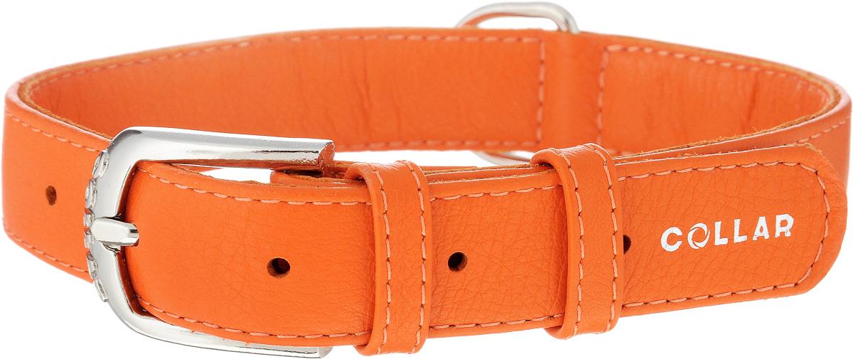Ошейник для собак CoLLaR Glamour, цвет: оранжевый, ширина 2,5 см, обхват шеи 38-49 см33044Ошейник CoLLaR Glamour изготовлен из натуральной кожи, устойчивой к влажности и перепадам температур. Клеевой слой, сверхпрочные нити, крепкие металлические элементы делают ошейник надежным и долговечным. Размер ошейника регулируется при помощи металлической пряжки. Имеется металлическое кольцо для крепления поводка. Ваша собака тоже хочет выглядеть стильно! Такой модный ошейник станет для питомца отличным украшением и выделит его среди остальных животных. Изделие отличается высоким качеством, удобством и универсальностью. Обхват шеи: 38-49 см. Ширина: 2,5 см.