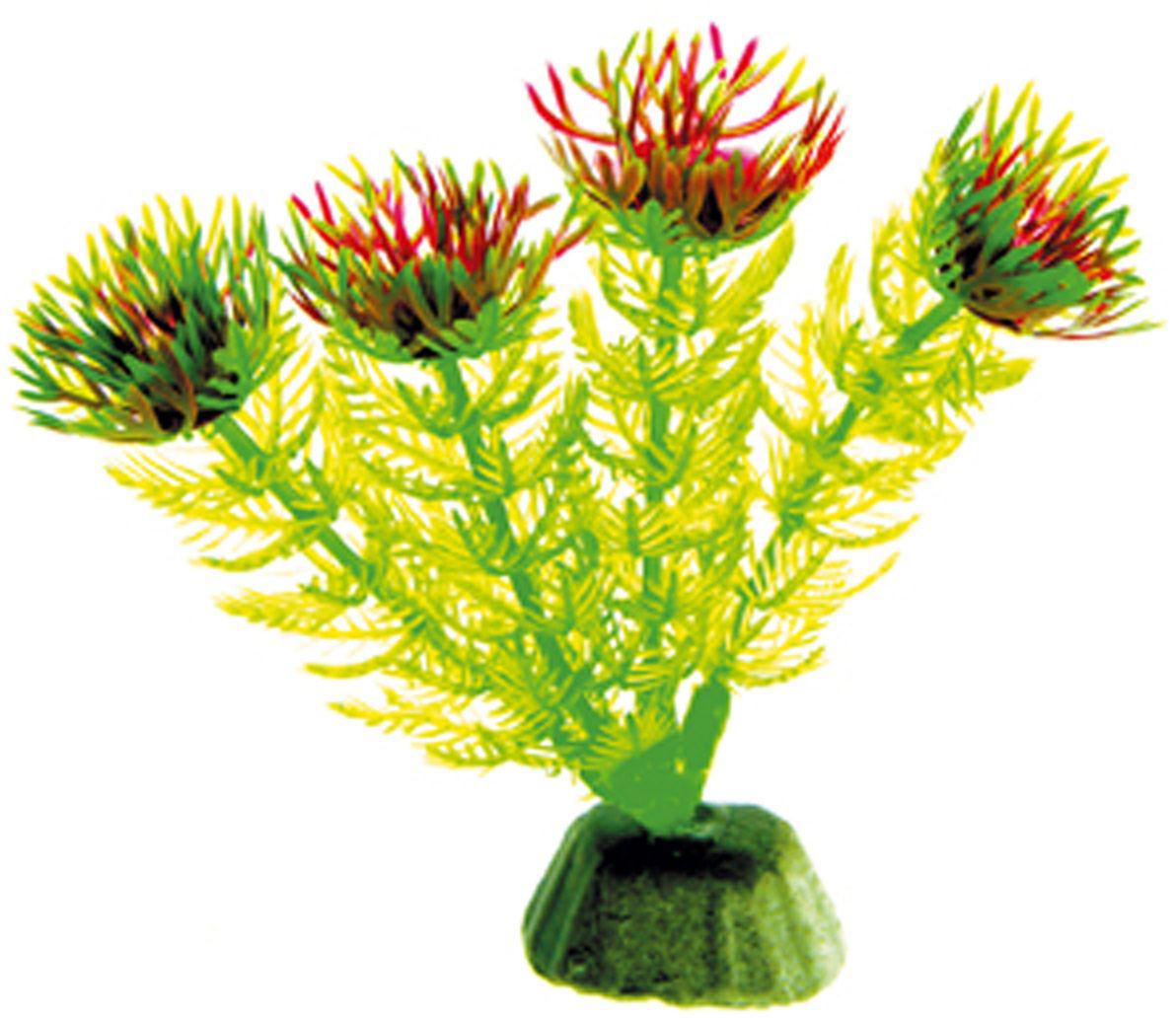 Искусственное растение Dezzie, 10 см. 56020025602002Подводные растения являются неотъемлемой частью композиции аквариума, радуют глаз, а также могут быть уютным убежищем для рыб и других обитателей аквариума. Пластиковые растения имеют устойчивое дно, которое не нуждается в дополнительном утяжелении и легко устанавливается в грунт. Они очень практичны в использовании, имеют стойкую к воздействию воды окраску и не требуют обременительного ухода. Их можно легко достать и протереть тряпкой во время уборки аквариума. Растения из пластика создадут неповторимый дизайн пресноводного или морского аквариума.