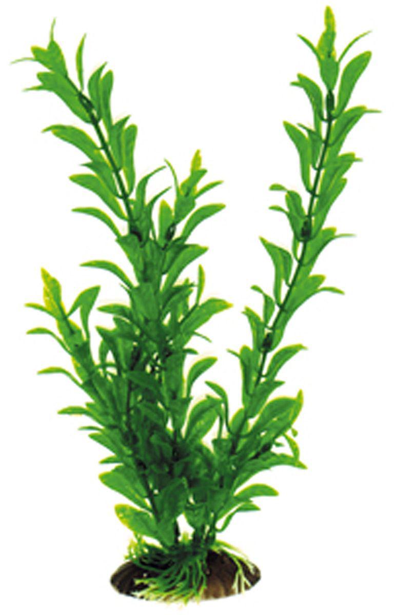 Искусственное растение Dezzie, 30 см. 56020435602043Подводные растения являются неотъемлемой частью композиции аквариума, радуют глаз, а также могут быть уютным убежищем для рыб и других обитателей аквариума. Пластиковые растения имеют устойчивое дно, которое не нуждается в дополнительном утяжелении и легко устанавливается в грунт. Они очень практичны в использовании, имеют стойкую к воздействию воды окраску и не требуют обременительного ухода. Их можно легко достать и протереть тряпкой во время уборки аквариума. Растения из пластика создадут неповторимый дизайн пресноводного или морского аквариума.