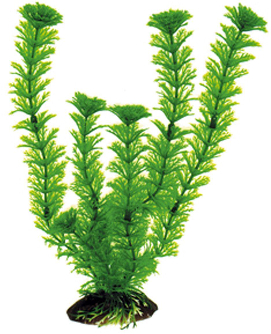 Искусственное растение Dezzie, 30 см. 56020485602048Подводные растения являются неотъемлемой частью композиции аквариума, радуют глаз, а также могут быть уютным убежищем для рыб и других обитателей аквариума. Пластиковые растения имеют устойчивое дно, которое не нуждается в дополнительном утяжелении и легко устанавливается в грунт. Они очень практичны в использовании, имеют стойкую к воздействию воды окраску и не требуют обременительного ухода. Их можно легко достать и протереть тряпкой во время уборки аквариума. Растения из пластика создадут неповторимый дизайн пресноводного или морского аквариума.