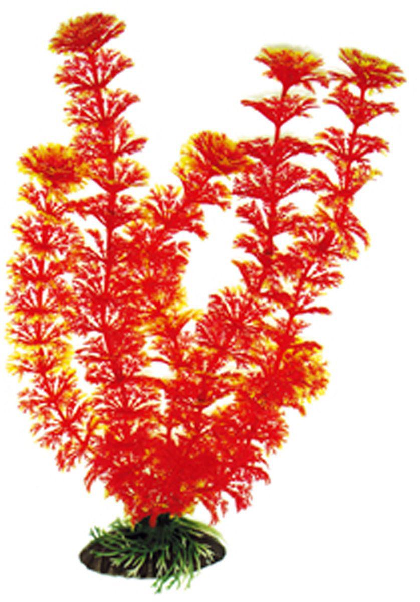 Искусственное растение для аквариума Dezzie, 30 см. 56020605602060Подводное искусственное растение для аквариума Dezzie является неотъемлемой частью композиции аквариума, радует глаз, а также может быть уютным убежищем для рыб и других обитателей аквариума. Пластиковое растение имеет устойчивое дно, которое не нуждается в дополнительном утяжелении и легко устанавливается в грунт. Растение очень практично в использовании, имеет стойкую к воздействию воды окраску и не требует обременительного ухода. Его можно легко достать и протереть тряпкой во время уборки аквариума. Растения из пластика создадут неповторимый дизайн пресноводного или морского аквариума. Высота растения: 30 см.