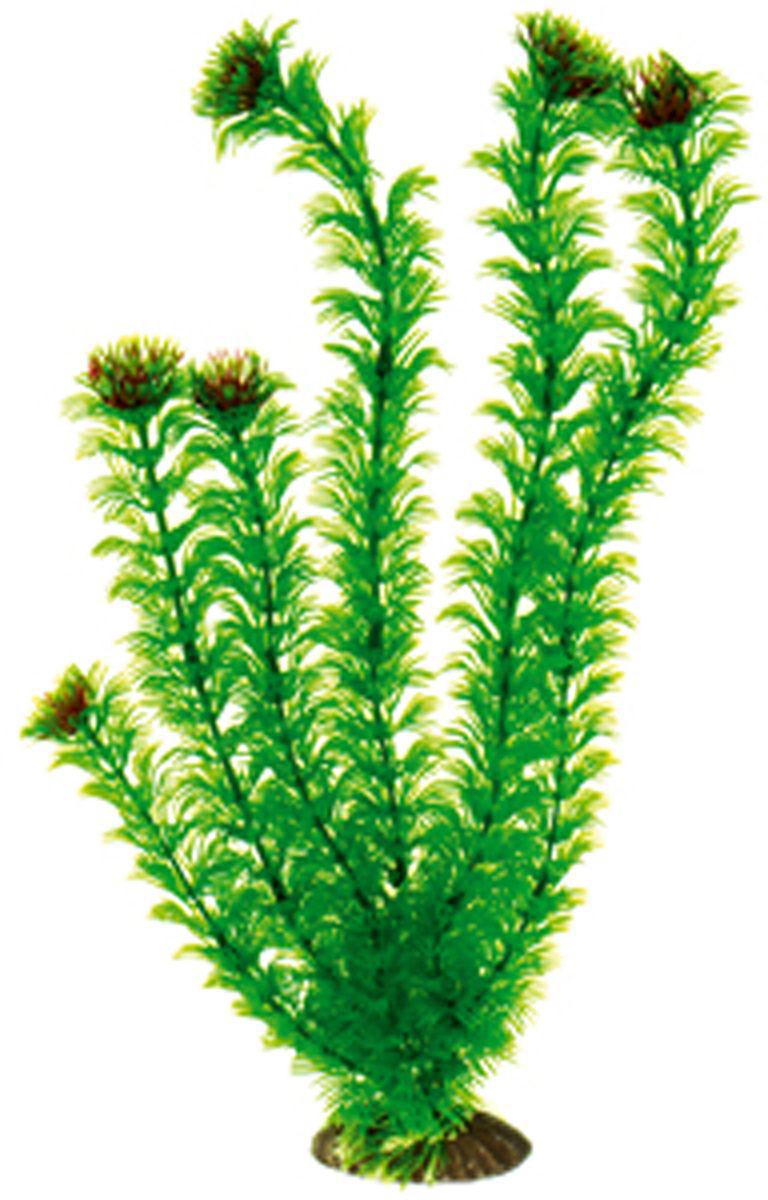 Искусственное растение для аквариума Dezzie, 40 см. 56020835602083Подводное искусственное растение для аквариума Dezzie является неотъемлемой частью композиции аквариума, радует глаз, а также может быть уютным убежищем для рыб и других обитателей аквариума. Пластиковое растение имеет устойчивое дно, которое не нуждается в дополнительном утяжелении и легко устанавливается в грунт. Растение очень практично в использовании, имеет стойкую к воздействию воды окраску и не требует обременительного ухода. Его можно легко достать и протереть тряпкой во время уборки аквариума. Растения из пластика создадут неповторимый дизайн пресноводного или морского аквариума. Высота растения: 40 см.