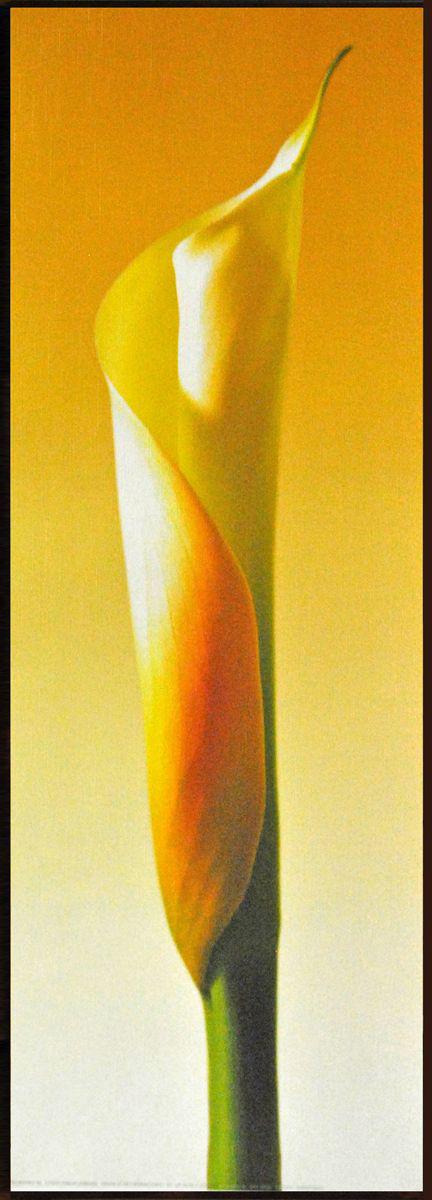 Декобокс СолоДомДекор Калла на желтом 2, 25х70 см2000191902556