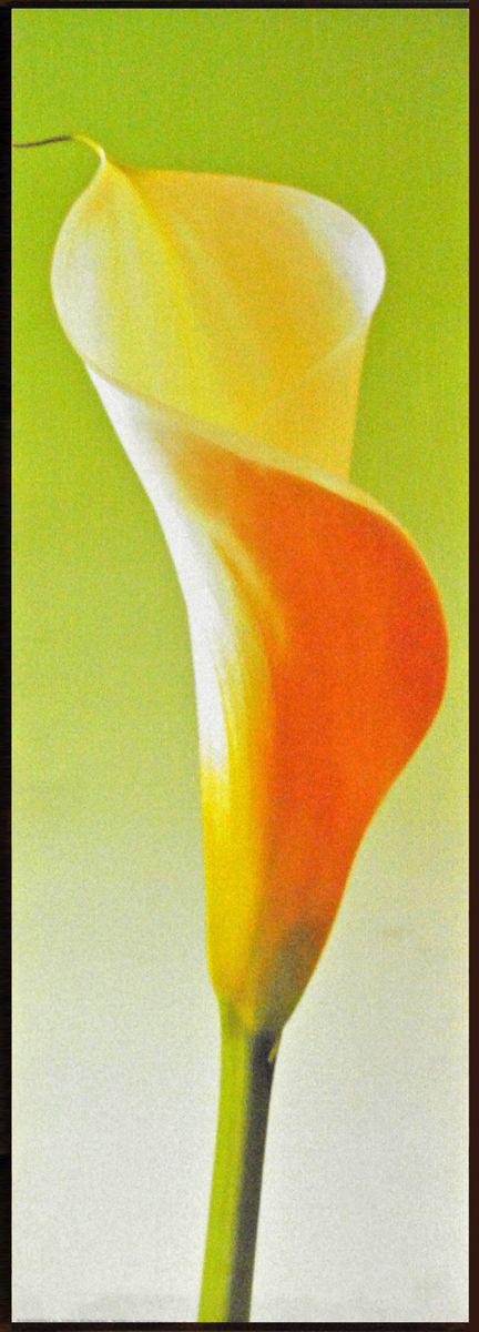 Декобокс СолоДомДекор Калла на зеленом 1, 25х70 см2000191902563