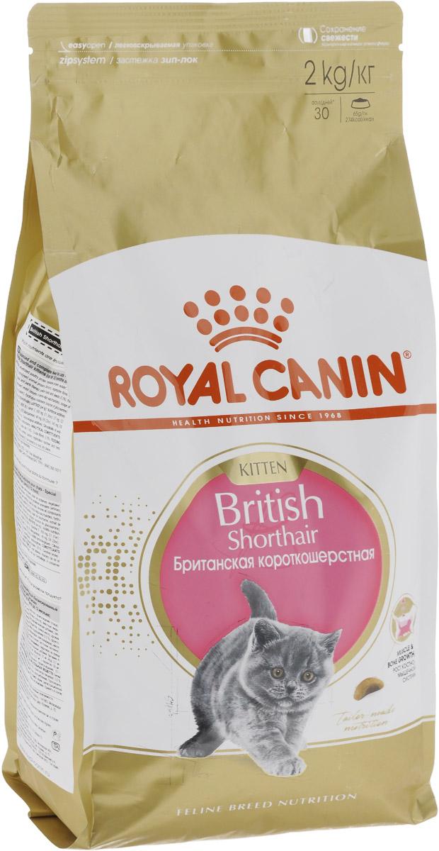 Корм сухой Royal Canin British Shorthair Kitten для британских короткошерстных котят в возрасте от 4 до 12 месяцев, 2 кг. 5267552675_новинкаКорм Royal Canin British Shorthair Kitten - полноценный сухой корм для британских короткошерстных котят от 4 до 12 месяцев. Фаза роста - ключевой этап развития котят этой удивительной породы, который определяет их будущее. В период роста у британских короткошерстных котят формируется сильное, мускулистое тело - отличительный признак породы. Именно адаптированное содержание белка, витаминов и минеральных веществ способствует развитию мышц и костей, обеспечивая гармоничный рост. Формула обогащена L- карнитином, который участвует в обмене жиров. Высокоусвояемые белки и пребиотики поддерживают баланс кишечной микрофлоры. А размер и текстура крокет в форме полумесяца разработаны специально для удобства захвата британскими короткошерстными котятами. Уникальная форма крокет способствует тщательному разгрызанию корма и поддержанию гигиены ротовой полости. Товар сертифицирован.