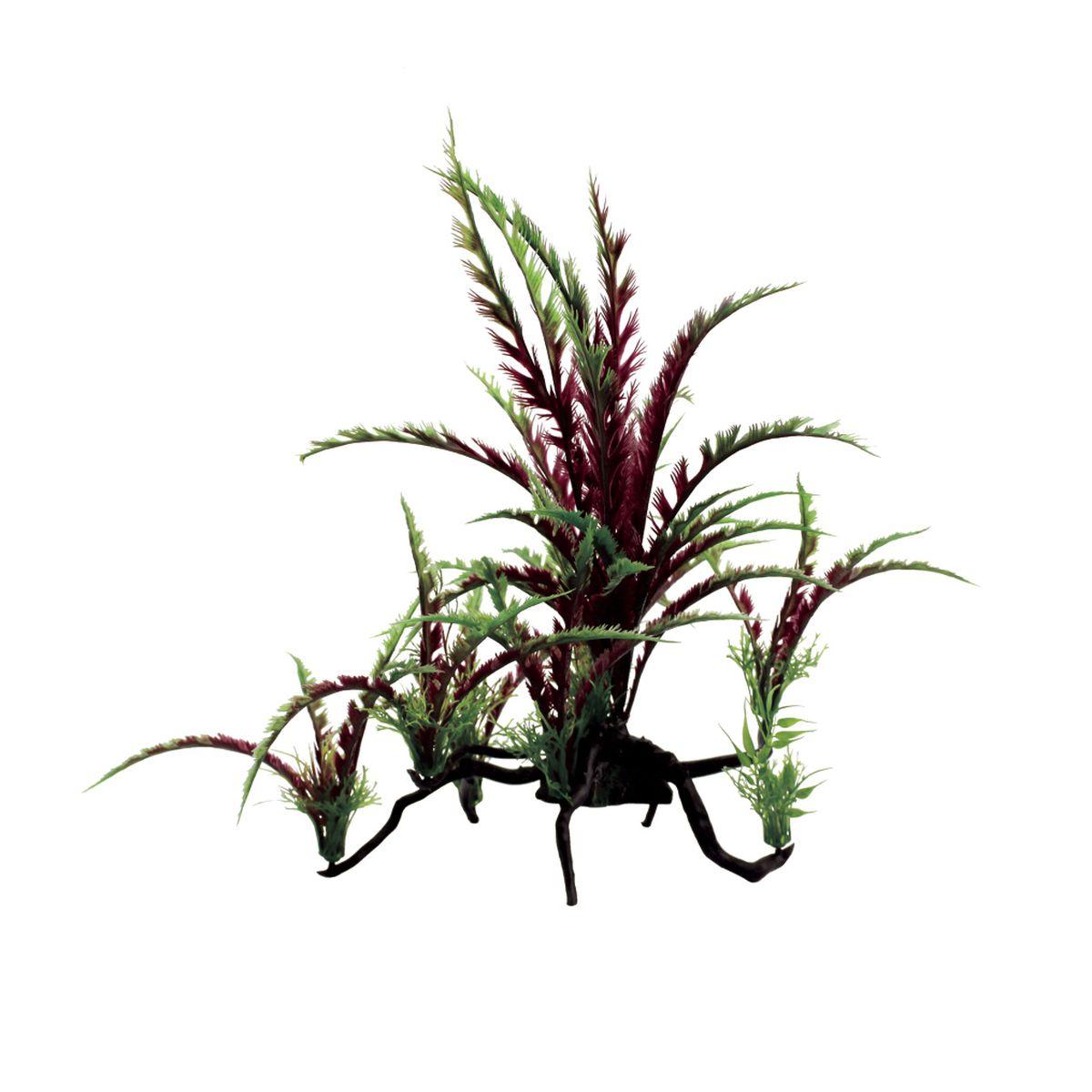 Композиция из растений для аквариума ArtUniq Дизиготека красная , 40 x 25 x 38 смART-1130303Композиция из растений для аквариума ArtUniq Дизиготека красная , 40 x 25 x 38 см