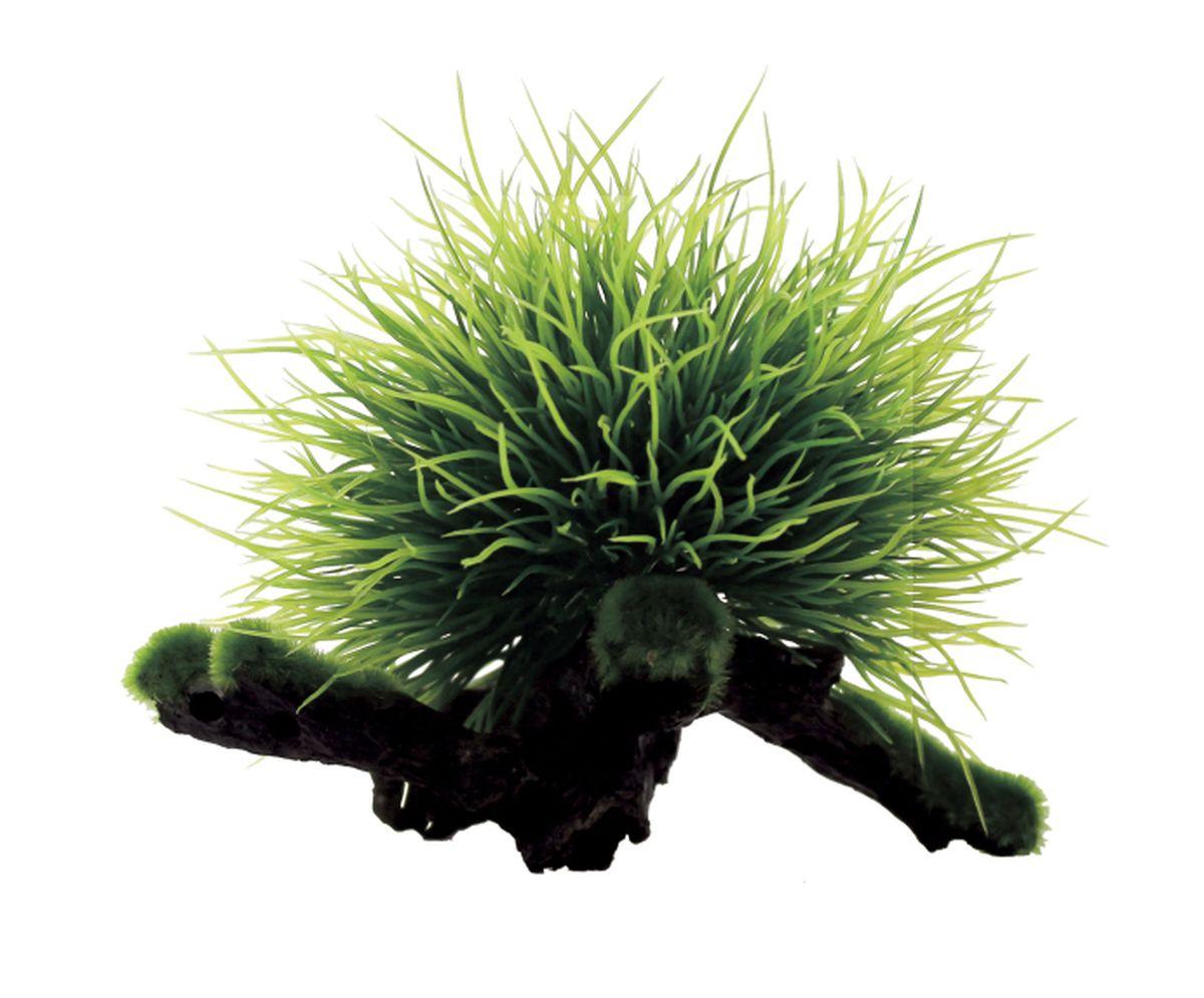 Композиция из растений для аквариума ArtUniq Пузырчатка на коряге, 15 x 12 x 12 смART-1130402Композиция из растений для аквариума ArtUniq Пузырчатка на коряге, 15 x 12 x 12 см