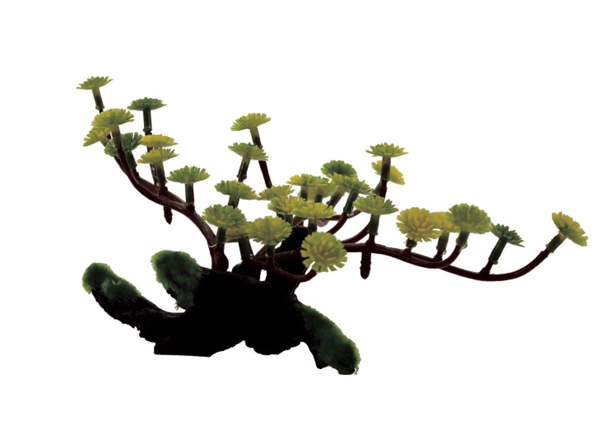 Композиция из растений для аквариума ArtUniq Марсилия на коряге, 22 x 12 x 11 смART-1130404Композиция из растений для аквариума ArtUniq Марсилия на коряге, 22 x 12 x 11 см