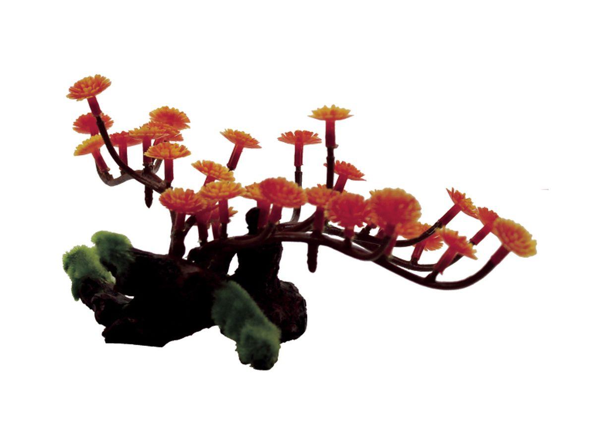 Композиция из растений для аквариума ArtUniq Марсилия красная на коряге, 20 x 17 x 10 смART-1130405Композиция из растений для аквариума ArtUniq Марсилия красная на коряге, 20 x 17 x 10 см