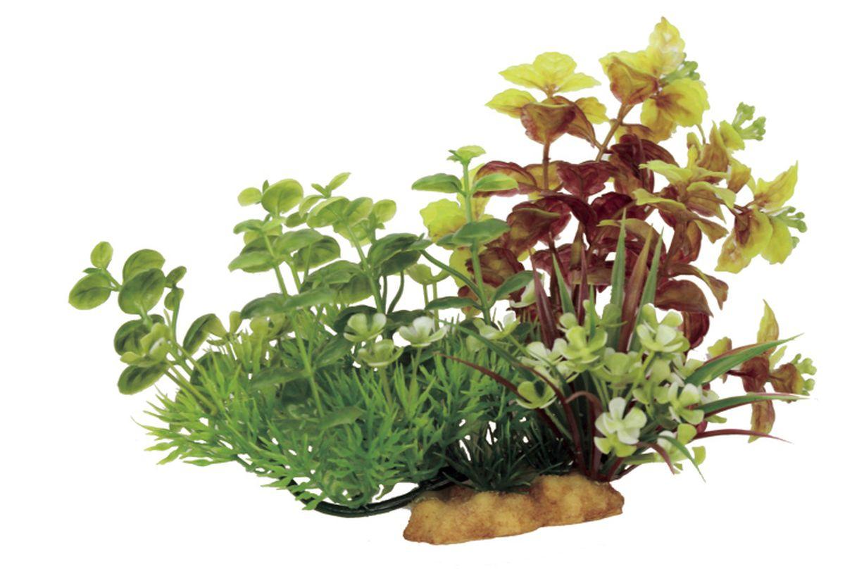 Композиция из растений для аквариума ArtUniq Лизимахия на ветке, 20 x 10 x 15 смART-1130501Композиция из растений для аквариума ArtUniq Лизимахия на ветке, 20 x 10 x 15 см