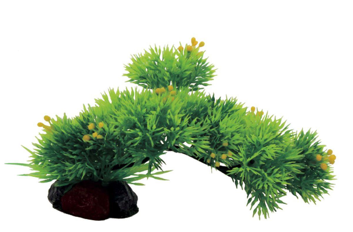 Композиция из растений для аквариума ArtUniq Риччия на ветке, 20 x 10 x 15 смART-1130506Композиция из растений для аквариума ArtUniq Риччия на ветке, 20 x 10 x 15 см
