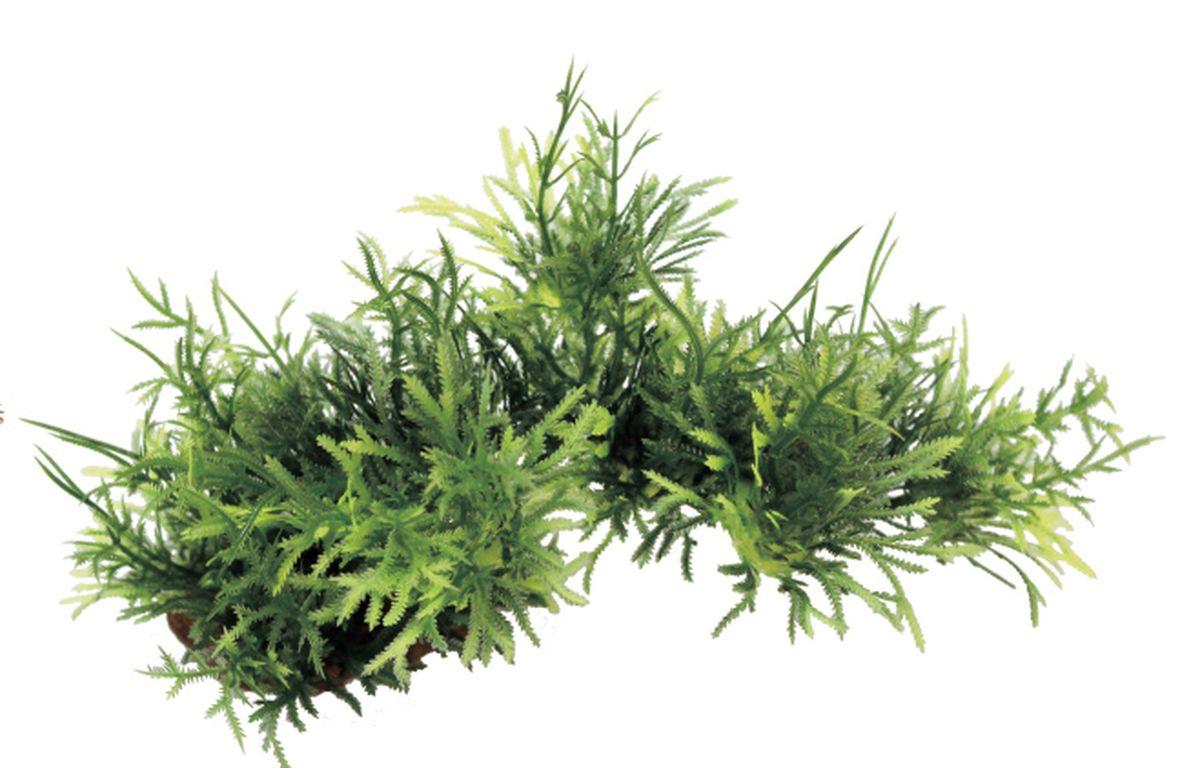 Композиция из растений для аквариума ArtUniq Мох на ветке, 20 x 10 x 11 смART-1130509Композиция из растений для аквариума ArtUniq Мох на ветке, 20 x 10 x 11 см