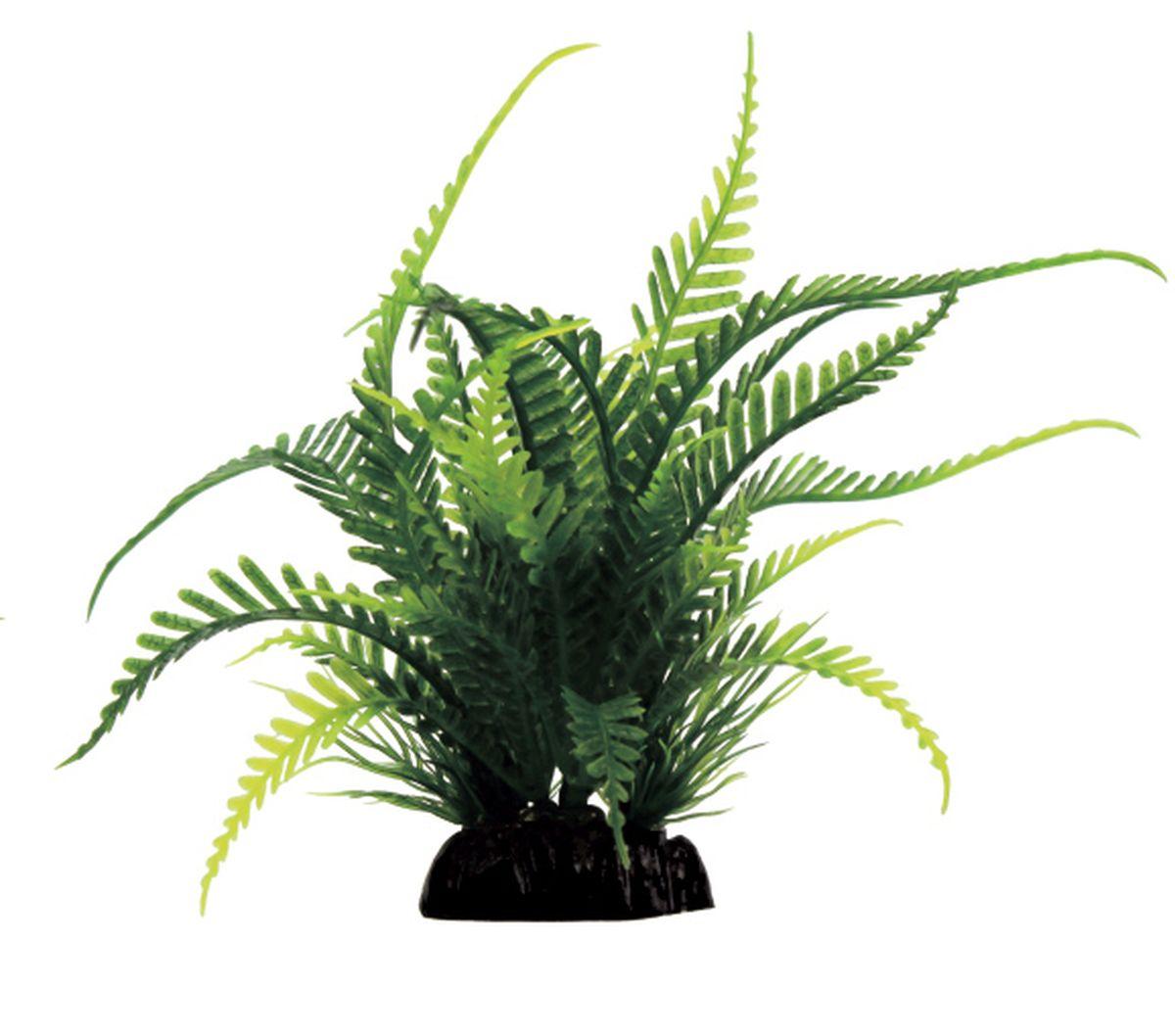 Растение для аквариума ArtUniq Папоротник, 15 x 8 x 15 смART-1130903Растение для аквариума ArtUniq Папоротник, 15 x 8 x 15 см