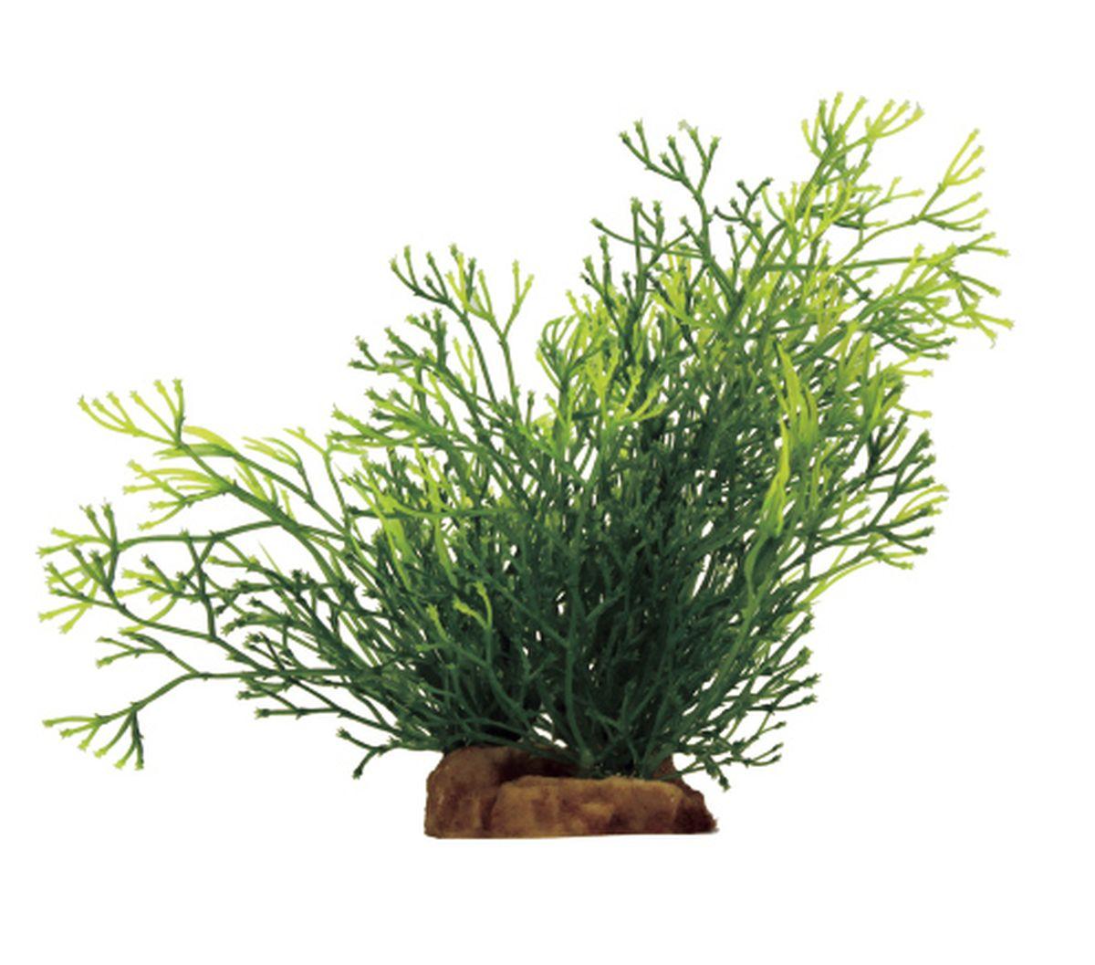 Растение для аквариума ArtUniq Блестянка, 16 x 15 x 18 смART-1130906Растение для аквариума ArtUniq Блестянка, 16 x 15 x 18 см