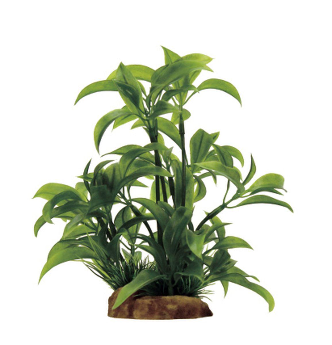 Растение для аквариума ArtUniq Альтернантера бетзикиана, 8 x 7 x 14 смART-1130909Растение для аквариума ArtUniq Альтернантера бетзикиана, 8 x 7 x 14 см