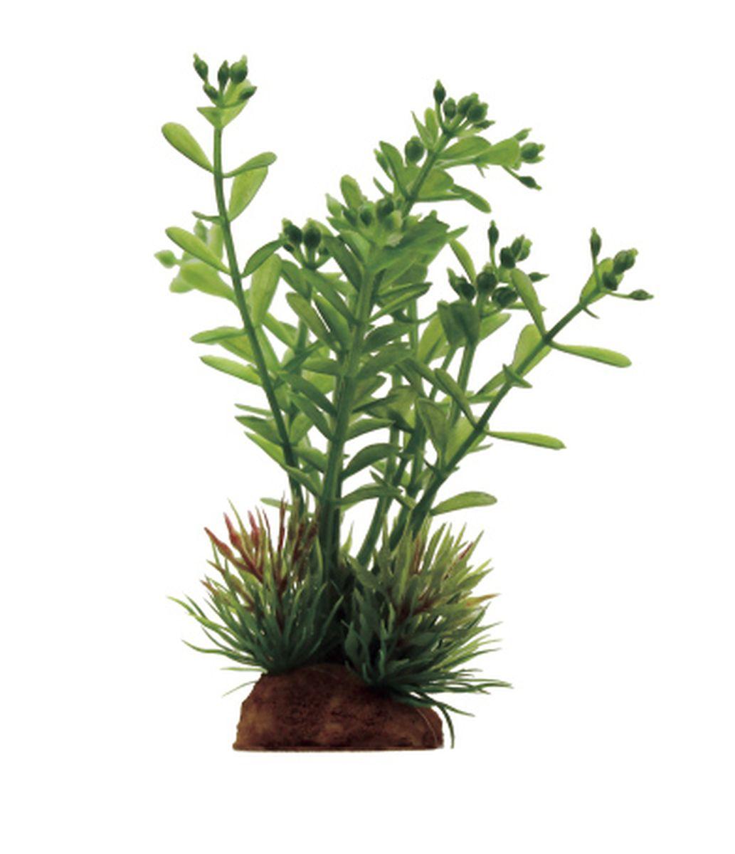 Композиция из растений для аквариума ArtUniq