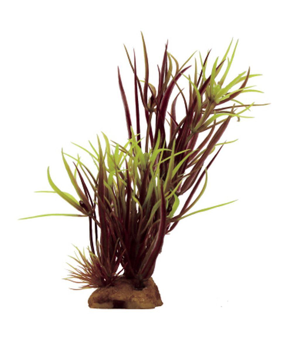 Композиция из растений для аквариума ArtUniq Лагаросифон мадагаскарский красный, 8 x 7 x 14 смART-1130916Композиция из растений для аквариума ArtUniq Лагаросифон мадагаскарский красный, 8 x 7 x 14 см