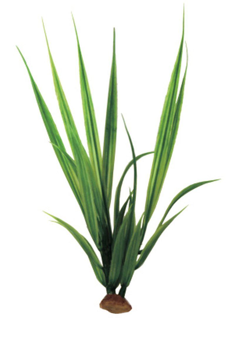 Растение для аквариума ArtUniq Акорус, 6 x 6 x 20 смART-1140511Растение для аквариума ArtUniq Акорус, 6 x 6 x 20 см