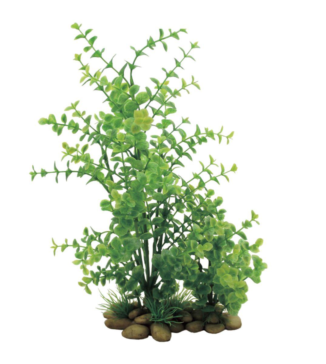 Растение для аквариума ArtUniq Лизимахия, высота 38 смART-1150103Растение для аквариума ArtUniq Лизимахия, высота 38 см