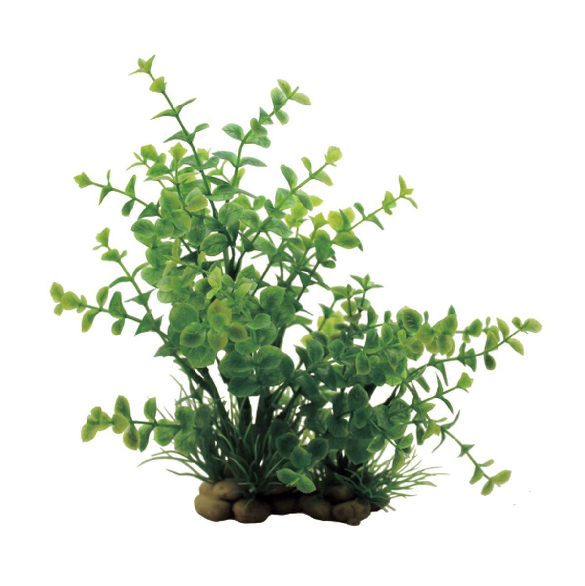 Растение для аквариума ArtUniq Лизимахия, высота 20 смART-1150303Растение для аквариума ArtUniq Лизимахия, высота 20 см