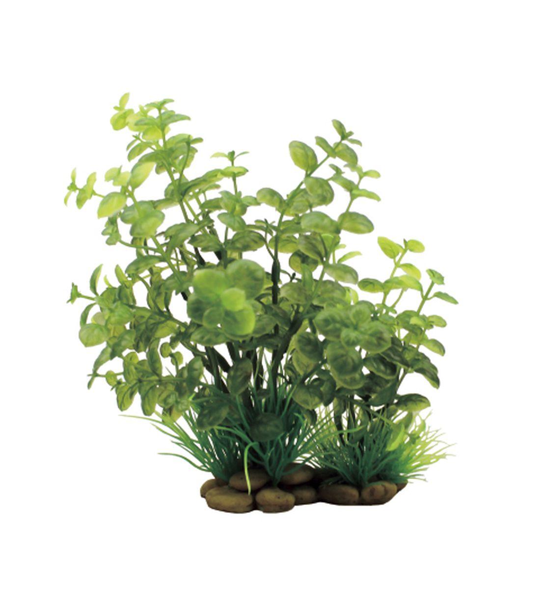 Растение для аквариума ArtUniq Кардамин, высота 20 смART-1150307Растение для аквариума ArtUniq Кардамин, высота 20 см
