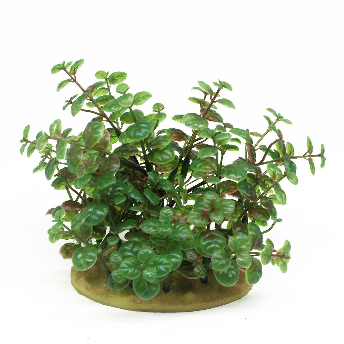 Растение для аквариума ArtUniq Кардамин, высота 15 смART-1160103Растение для аквариума ArtUniq Кардамин, высота 15 см