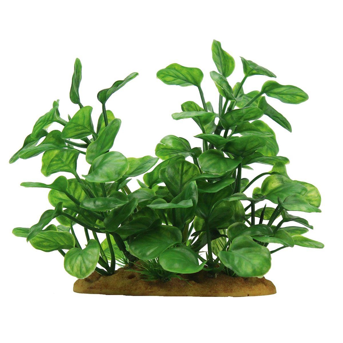 Растение для аквариума ArtUniq Анубиас, высота 15 смART-1160106Растение для аквариума ArtUniq Анубиас, высота 15 см