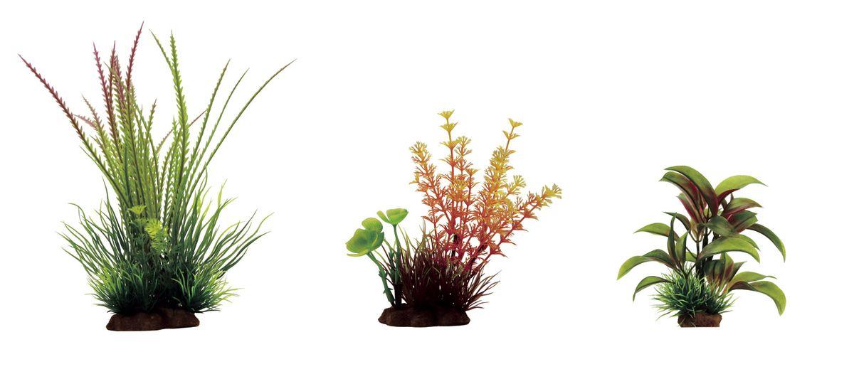 Растение для аквариума ArtUniq Гигрофила перистонадрезанная, амбулия оранжевая, альтернантера бетзикиана, высота 10-20 см, 3 штART-1170101Растение для аквариума ArtUniq Гигрофила перистонадрезанная, амбулия оранжевая, альтернантера бетзикиана, высота 10-20 см, 3 шт