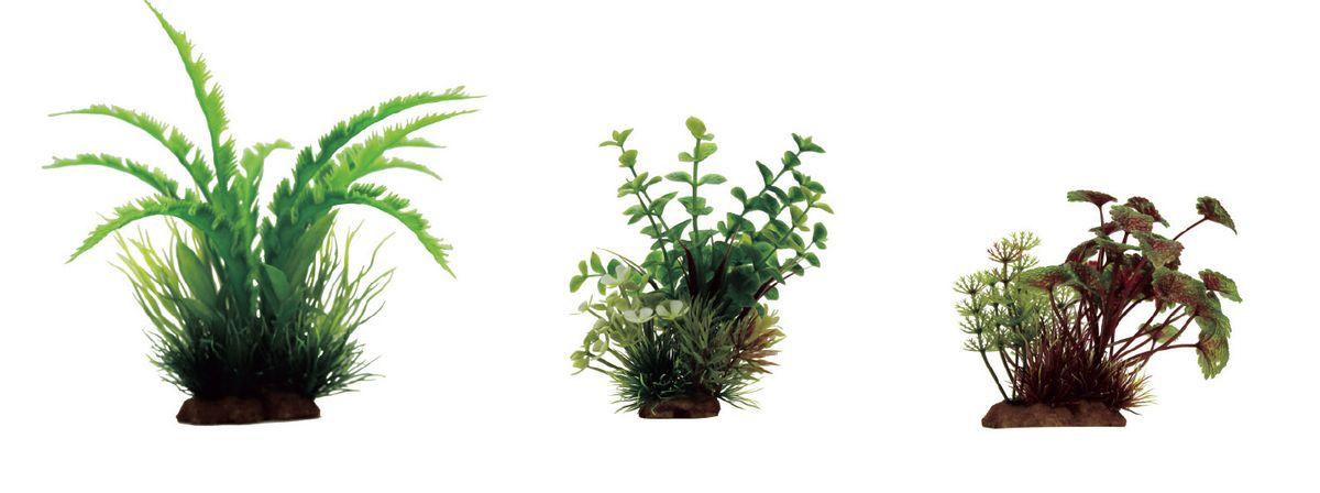 Растение для аквариума ArtUniq Дизиготека, бакопа, щитолистник красно-зеленый, высота 10-20 см, 3 штART-1170104Растение для аквариума ArtUniq Дизиготека, бакопа, щитолистник красно-зеленый, высота 10-20 см, 3 шт