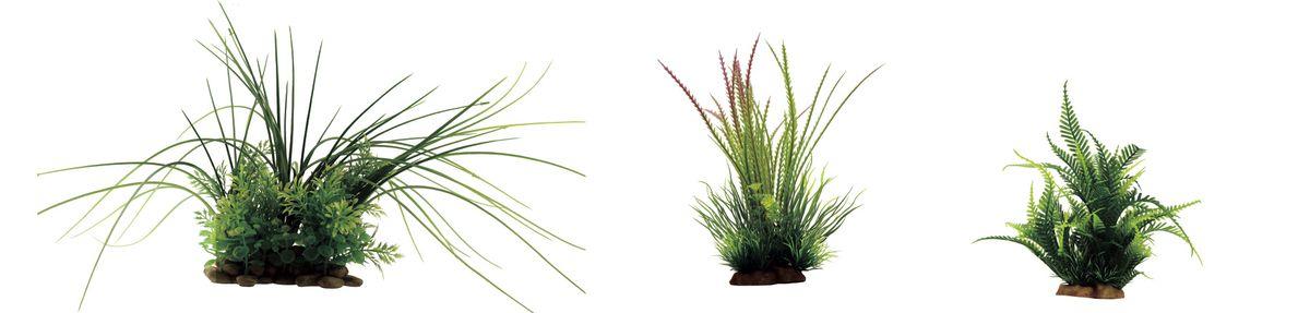 Растение для аквариума ArtUniq Валлиснерия, гигрофила перистонадрезанная, папоротник, высота 15-35 см, 3 штART-1170202Растение для аквариума ArtUniq Валлиснерия, гигрофила перистонадрезанная, папоротник, высота 15-35 см, 3 шт