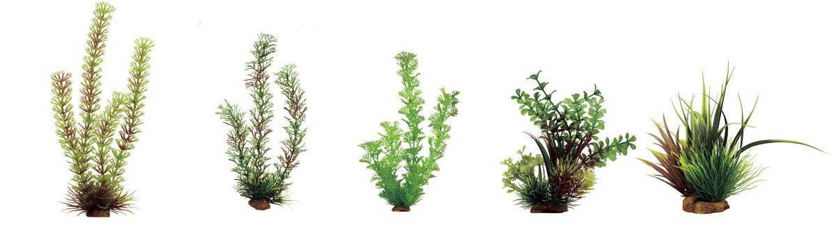 Растение для аквариума ArtUniq Амбулия, перистолистник, кабомба, микрантемум, акорус, высота 15-35 см, 5 штART-1170206Растение для аквариума ArtUniq Амбулия, перистолистник, кабомба, микрантемум, акорус, высота 15-35 см, 5 шт
