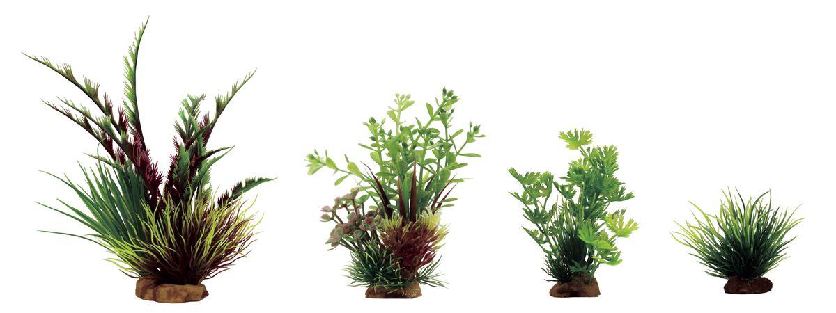 Растение для аквариума ArtUniq Дизиготека красно-зеленая, ротала, лютик водный, лилеопсис, высота 8-23 см, 4 штART-1170303Растение для аквариума ArtUniq Дизиготека красно-зеленая, ротала, лютик водный, лилеопсис, высота 8-23 см, 4 шт