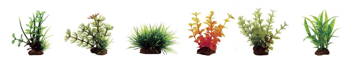 Растение для аквариума ArtUniq Микрантемум, кабомба, лилеопсис, ротала оранжевая, амбулия, гигрофила сиамская, высота 7-10 см, 6 штART-1170402Растение для аквариума ArtUniq Микрантемум, кабомба, лилеопсис, ротала оранжевая, амбулия, гигрофила сиамская, высота 7-10 см, 6 шт