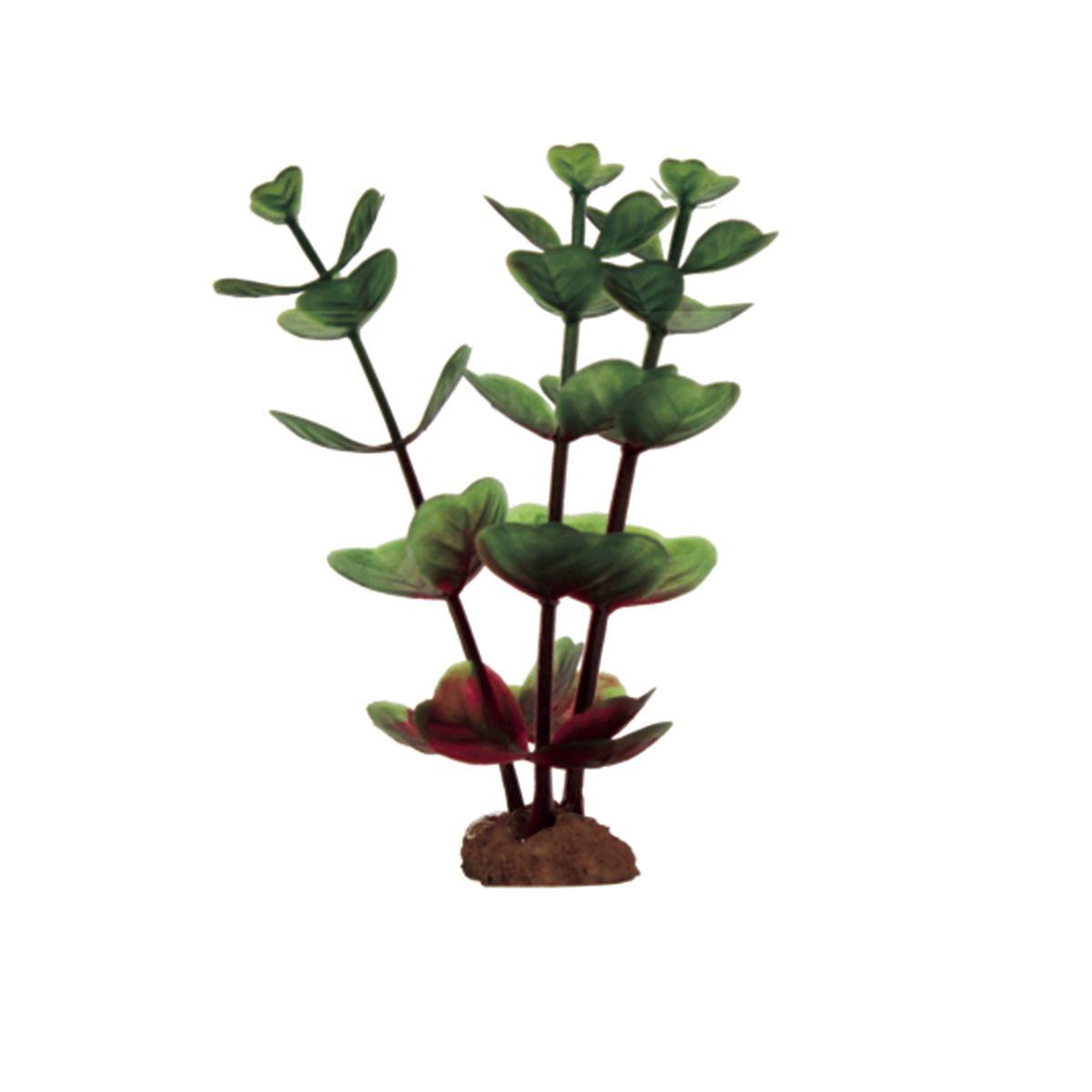 Растение для аквариума ArtUniq Бакопа крано-зеленая, высота 10 см, 6 штART-1170503Растение для аквариума ArtUniq Бакопа крано-зеленая, высота 10 см, 6 шт
